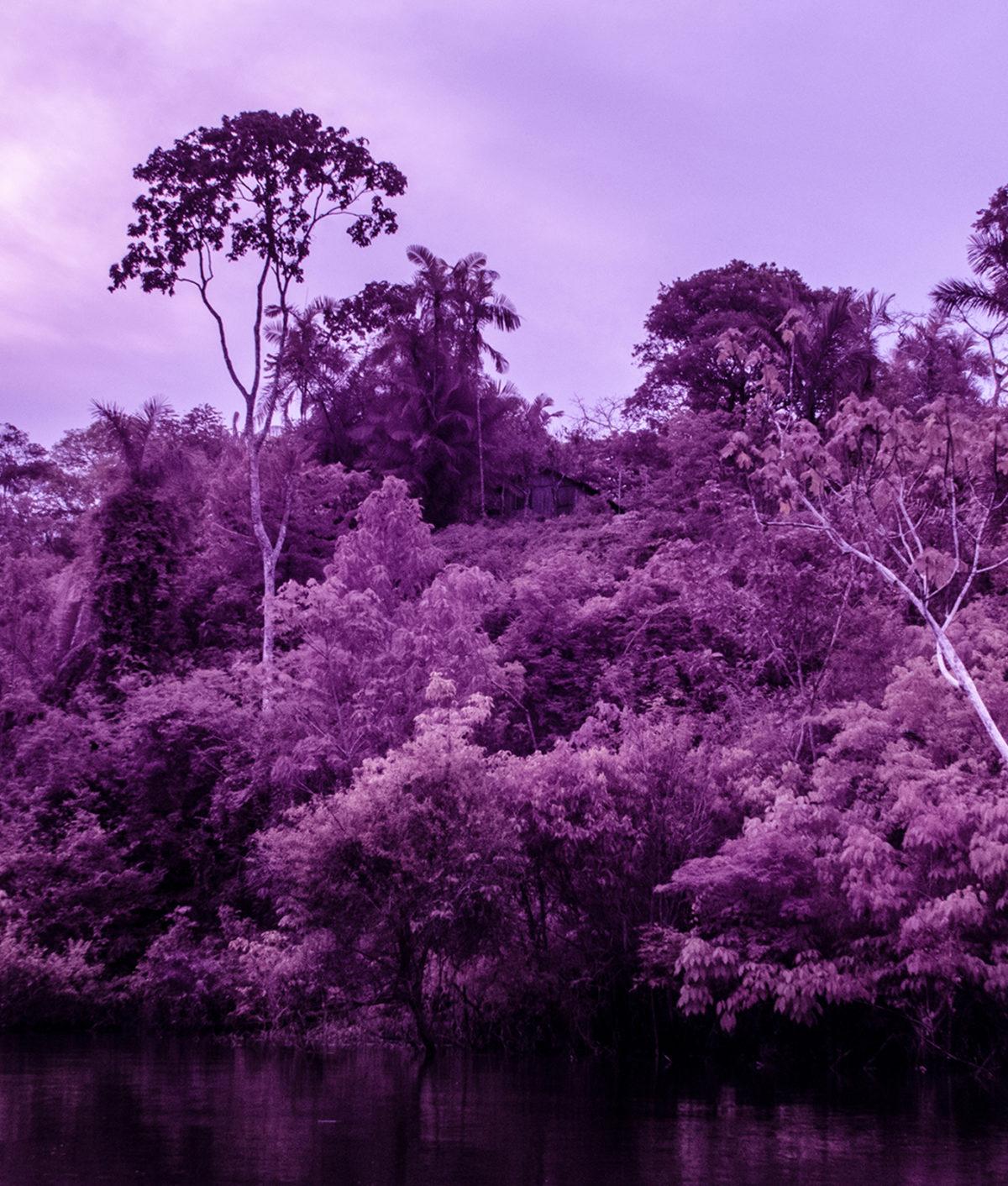 Amazonas. Suoni e immagini per ritrovare le nostre terre