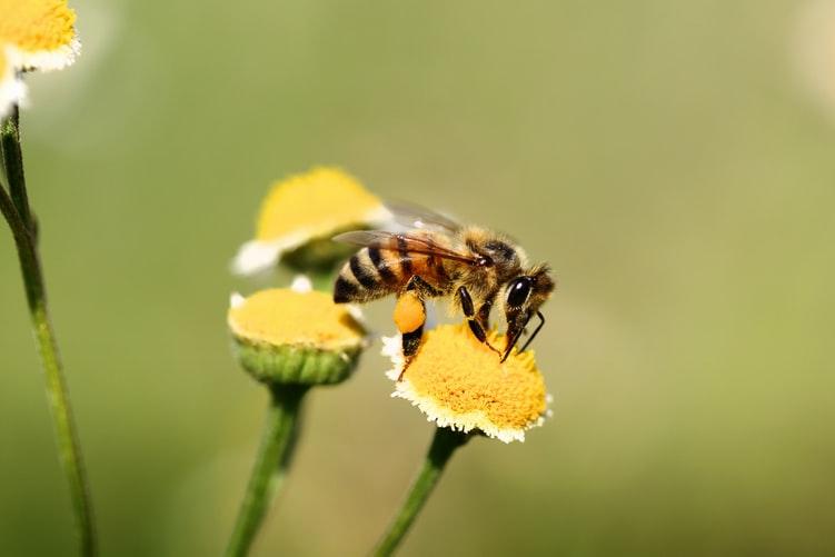 Aiutare le api coi nostri giardini